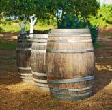 trzy beczki wina Obraz Stock