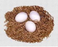 Trzy białego jajka kłamają w gniazdeczku, przejrzysty tło, png obrazy stock
