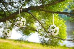 Trzy białego round ślubnego bukieta wiesza na gałąź drzewo Obraz Royalty Free