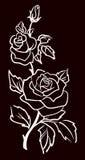 Trzy białej róży odizolowywającej na czarnym tle Obraz Stock