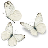Trzy biel motyl Zdjęcie Royalty Free