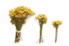 Trzy bukieta wysuszeni kwiaty na białym tle Zdjęcie Stock