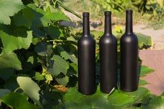 Trzy butelki wino stojaki przeciw zielonym li?ciom winnica ocet naturalny nap?j, intymni winnicy naturalny nap?j, obraz stock