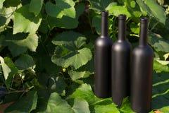 Trzy butelki wino stojaki przeciw zielonym li?ciom winnica ocet naturalny nap?j, intymni winnicy naturalny nap?j, obrazy stock