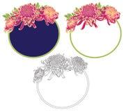 Trzy chryzantema kwiatu round ramy Obraz Stock