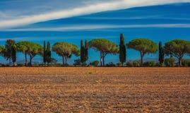 Trzy cyprysu w Tuscany, panoramiczny krajobraz w pięknym słońcu Zdjęcia Royalty Free