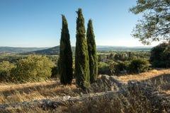 Trzy cyprysu wewnątrz w odpowiednim Muehle w Provence Obrazy Stock