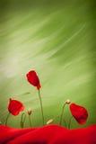 Trzy czerwień maczka pączka i kwiaty Fotografia Royalty Free