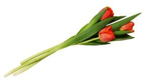 Trzy czerwień tulipanu kwiatów bukiet Fotografia Royalty Free