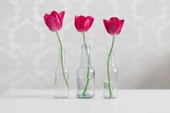 trzy czerwone tulipany Zdjęcia Royalty Free