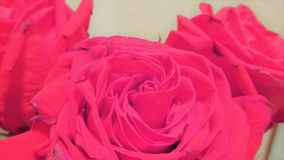Trzy czerwonego kwiatu 2 Zdjęcia Stock