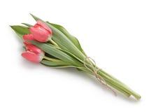Trzy czerwonego tulipanu Fotografia Stock