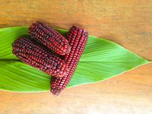 trzy czerwonej kukurudzy Zdjęcia Royalty Free
