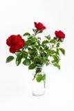 Trzy czerwonej róży w szklanej butelce odizolowywającej na białym tle Zdjęcia Royalty Free