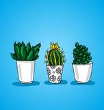 Trzy dekoracyjny doniczkowy kaktus Obraz Royalty Free