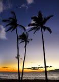 Trzy drzew sylwetka przeciw zmierzchowi Obraz Stock
