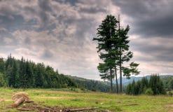 trzy drzewa Obraz Stock