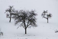 trzy drzewa zdjęcia royalty free