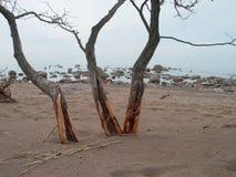 trzy drzewa Zdjęcie Royalty Free