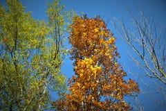 trzy drzewa Fotografia Royalty Free