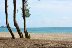 Trzy drzewa na Hawaje linii brzegowej Zdjęcie Royalty Free