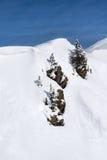 Trzy drzewa na trzy skałach na górze śnieżnej góry Obrazy Stock