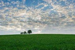 Trzy drzewa na zielenieją pole z cudownym niebem Obraz Stock