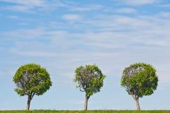 Trzy drzewa przeciw niebu Obrazy Royalty Free