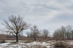 Trzy drzewa przy śnieżnym polem Obrazy Stock
