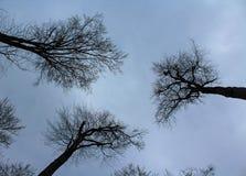 Trzy drzewa w lesie Zdjęcia Royalty Free