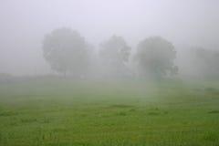 Trzy drzewa w mgle Obraz Royalty Free