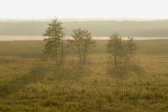 Trzy drzewa w promieniach ranku słońce po środku ogromnego pola, świt, przy odgórną białą pustą linią dla teksta Zdjęcie Royalty Free