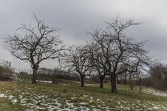 Trzy drzewa w zima krajobrazie Zdjęcie Royalty Free