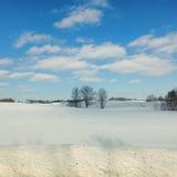 Trzy drzewa w zimy polu Obraz Royalty Free