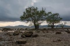 trzy drzewo Obrazy Stock