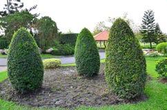 trzy drzewo zdjęcie stock