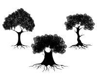 Trzy drzewo sylwetki Obrazy Stock