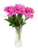 Trzy dużej różowej peoni w szklanej wazie Zdjęcia Stock