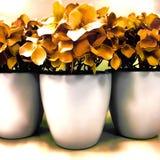Trzy Emaliowego garnka z Wysuszonymi kwiatami Zdjęcia Royalty Free