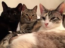 Trzy figlarki na łóżku Obrazy Stock