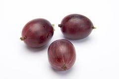 Trzy gęsiej jagody Zdjęcia Royalty Free