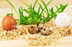 Trzy gniazdeczka z świeżymi jajkami Zdjęcie Royalty Free