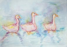 Trzy gooses różowy pływać Fotografia Stock