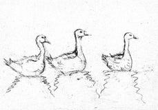 Trzy gooses w czerni i witka rysunku Obrazy Stock