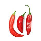Trzy gorącego chili pieprzu na bielu Obraz Stock