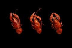 Trzy gotowanego crayfishes odizolowywającego na czerni Fotografia Royalty Free