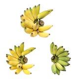Trzy gron นà¸' Kultywował banany lub Tajlandzkich banany odizolowywających na bielu Fotografia Royalty Free