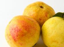 Trzy guava owoc odizolowywającej obraz stock