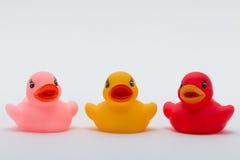 Trzy Gumowej kaczki w Różnych kolorach Obrazy Stock