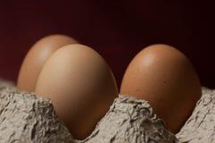Trzy jajka w kartonowej jajecznej tacy Zdjęcia Stock
